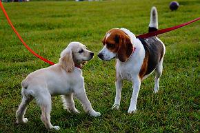 Hundetraining, Leinenaggression