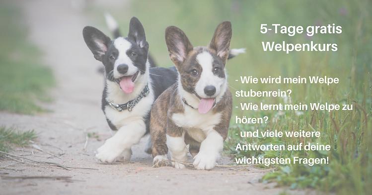 Welpenkurs Online(1).png