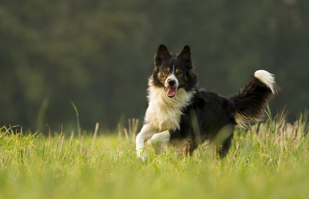 Hundetraining, Hundeschule