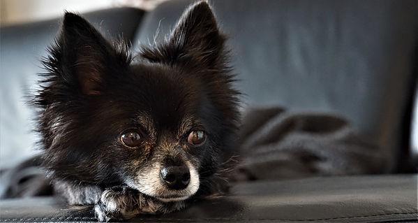 Problemberatung, Hundetrainng