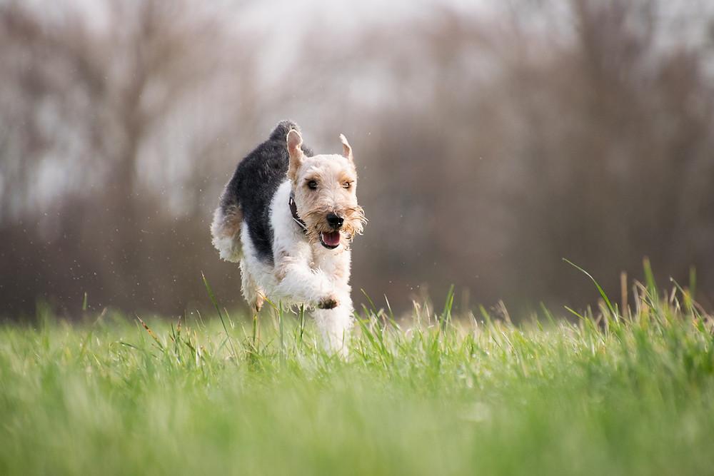 Rückruf, Hundetraining