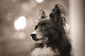 dog-3873971_1920.jpg