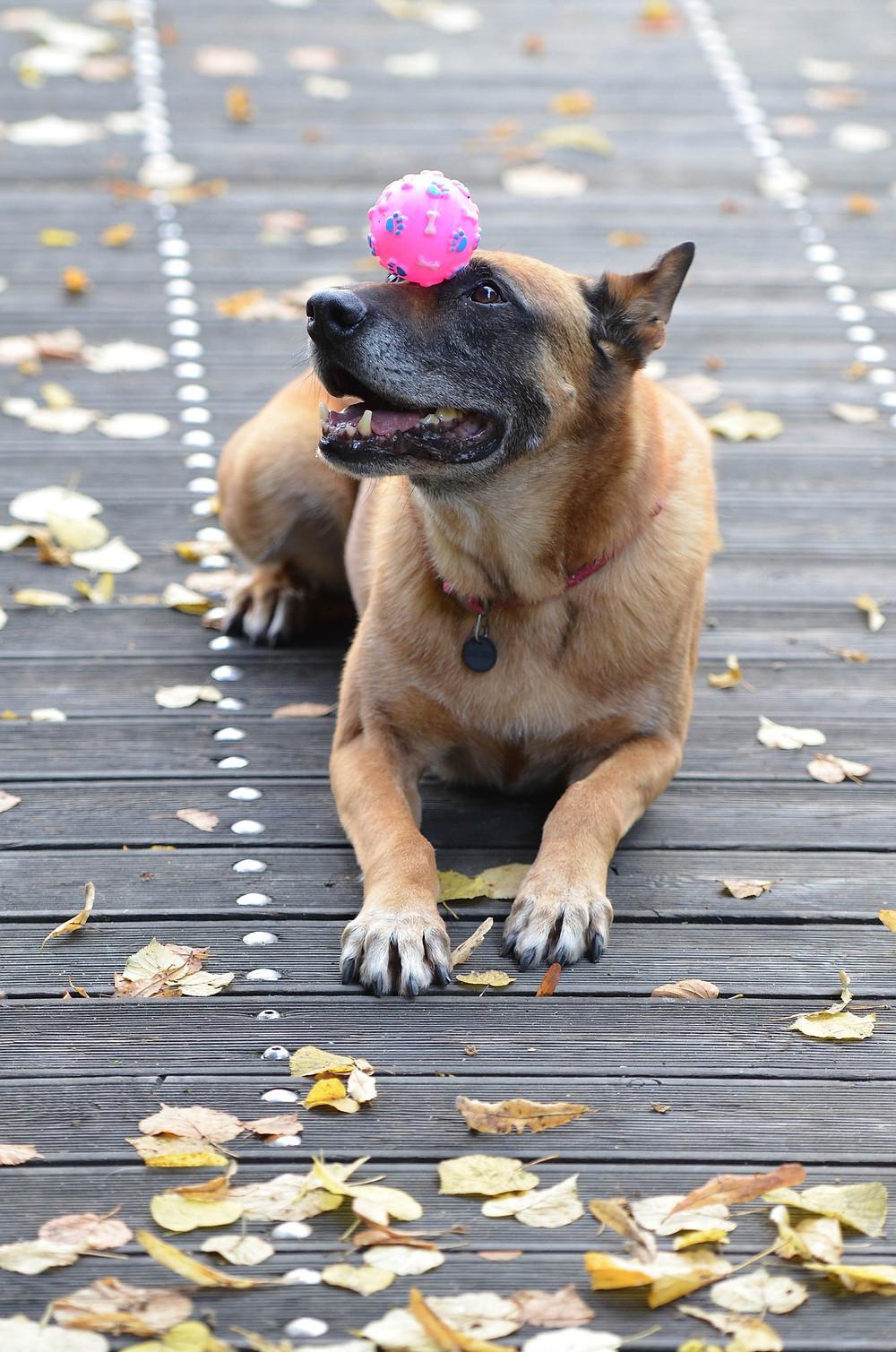 Hundetraining, positive Verstärkung