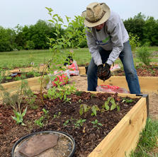 Adding mulch to the raised bed gardens.