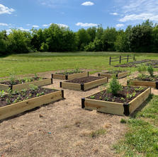 6 raised beds planted.