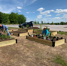 Planting native plants that will help attract the butterflies.