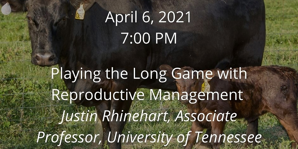 Beef Webinar Series: Playing the Long Game with Reproductive Management