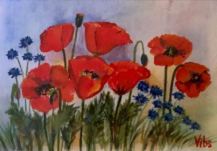 Poppies with Cornflowers