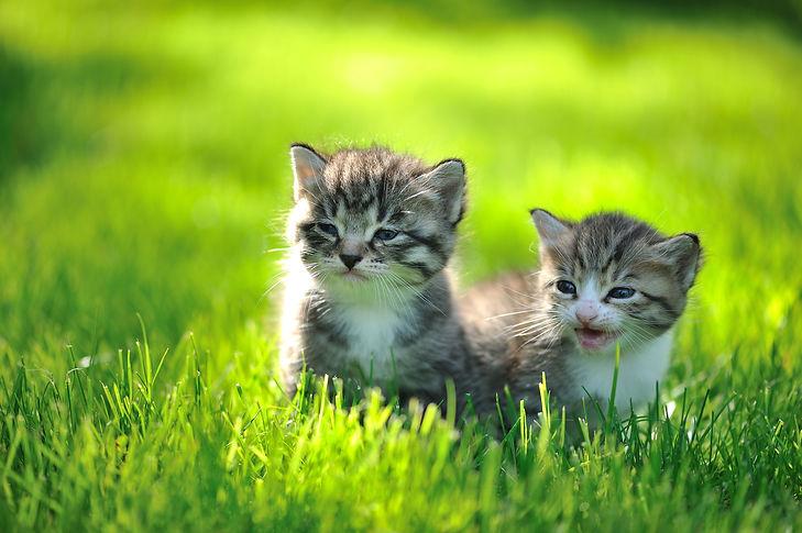 kittens alone in grass.jpg