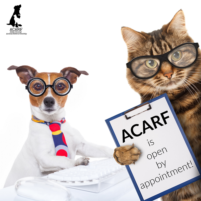 ACARF is open by appointment dog cat adm