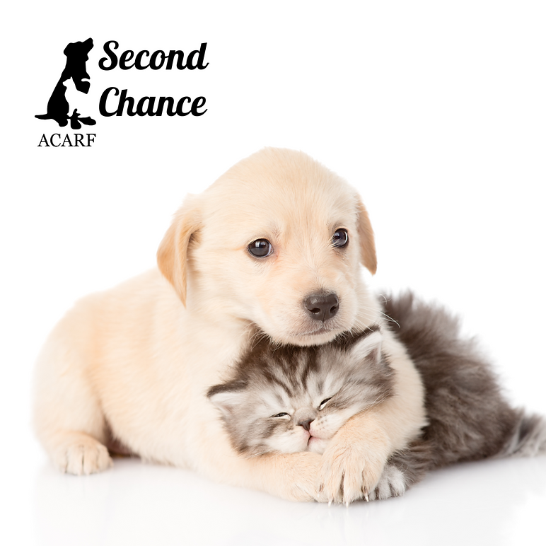 second chance temporarily closed post.pn