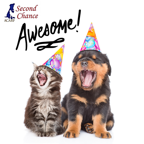 Second Chance re-opening-1.png