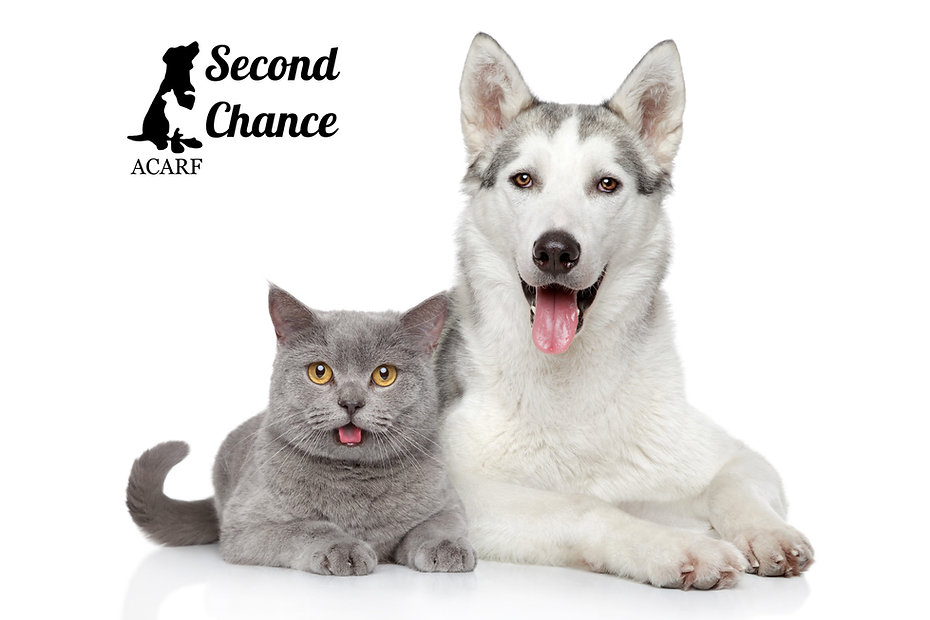 second chance happy dog and cat.jpg