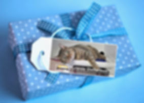 cat on Kuranda shelter bed blue gift box