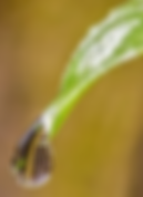 water drop on leaf.png