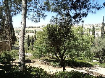 Garden of Gethsemane.jpg