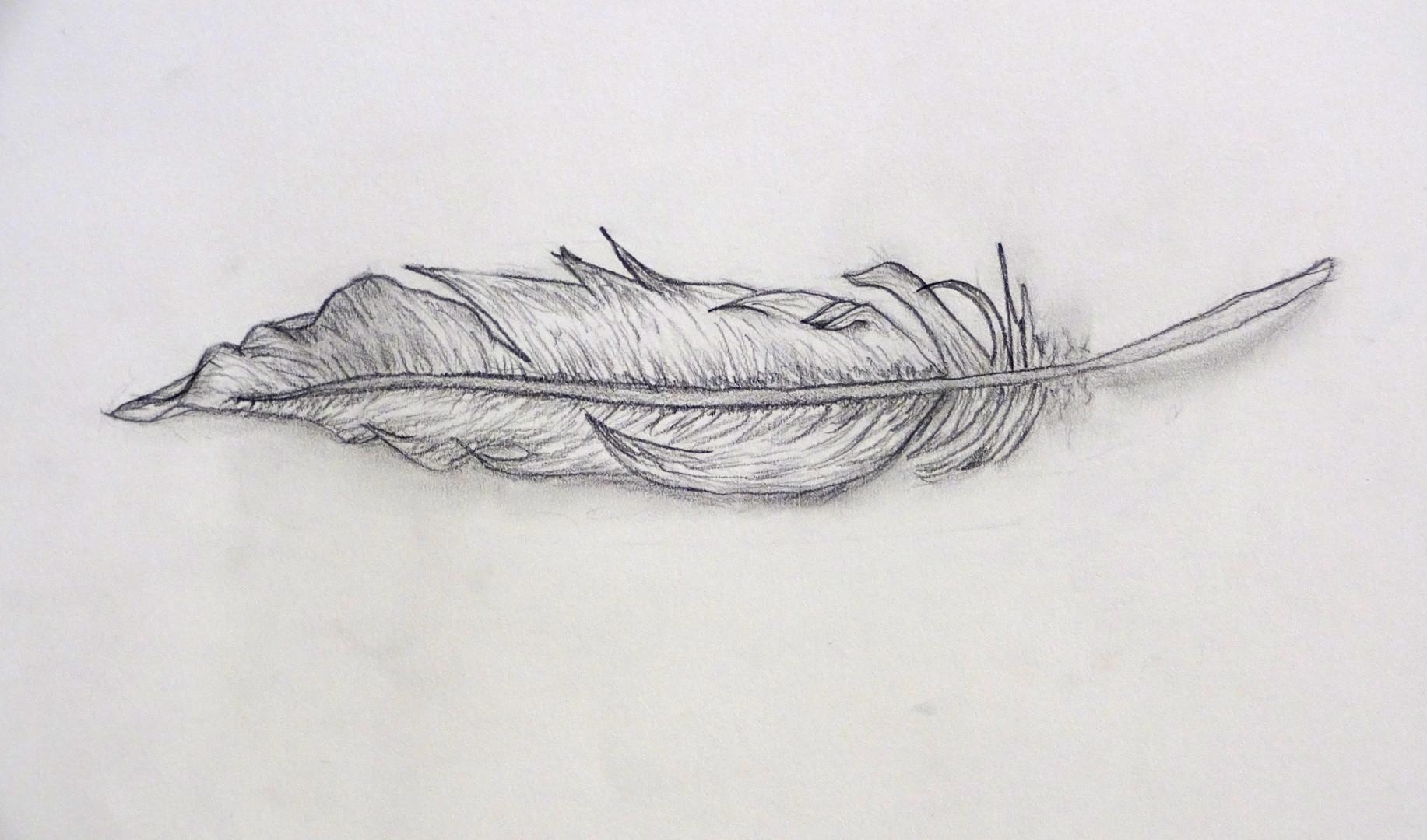 billedskoleelev har tegnet en fjer