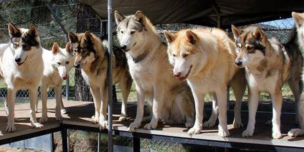 Ancestors and Wolf Magic Retreat
