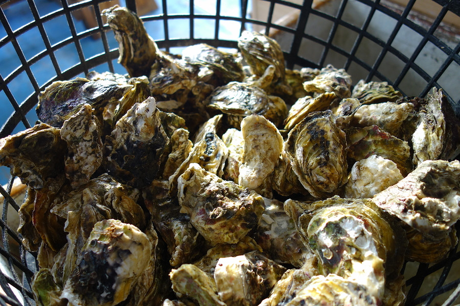 Buying and Storing Oysters is easy with a few tips