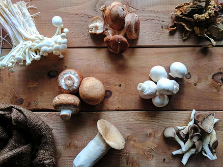 Mushroom 101: The Ultimate Guide on How to Select, Store, Clean & Cook The Best Mushroom Varieti