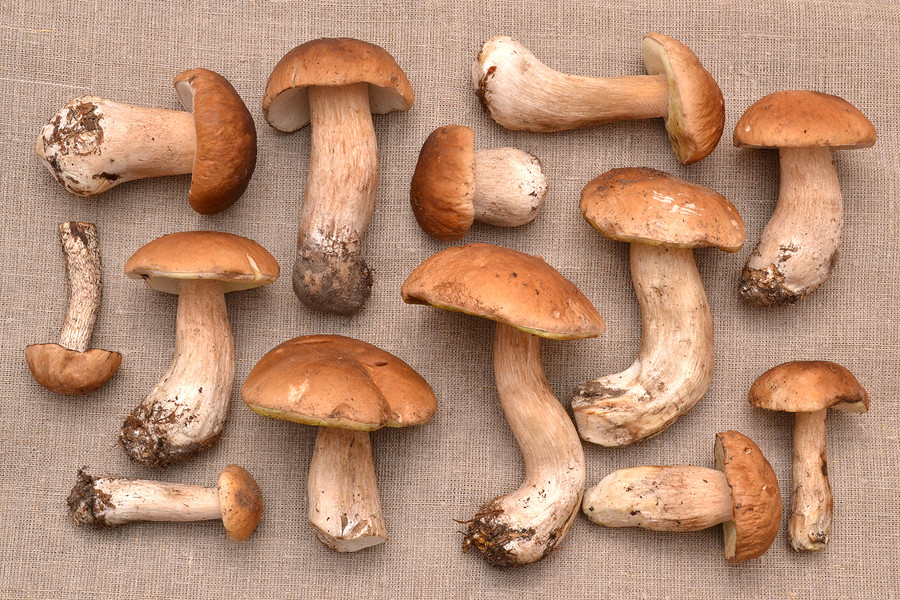 Porcini mushrooms add lots of flavour to your dish, so use sparingly