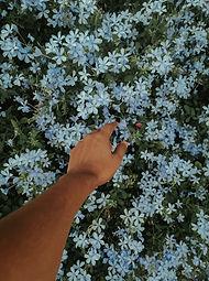 blue-flowers_edited.jpg