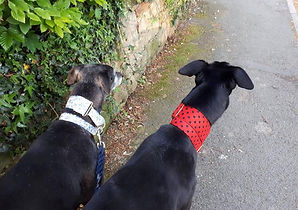 Murphy and rosie.jpg
