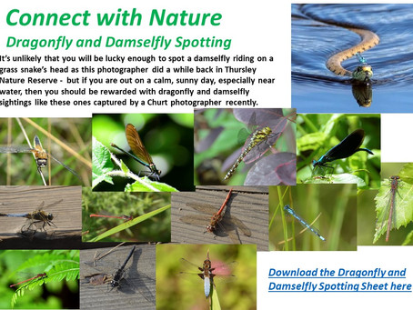 Connect with Nature Dragonfly and Damselfly