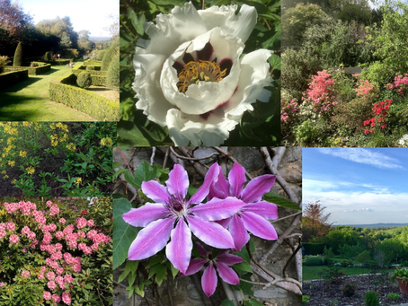 CHAPS members have been taking photos in their gardens.Montage 1: 20 May