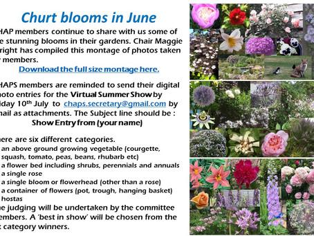 CHAPS Garden in Bloom in June