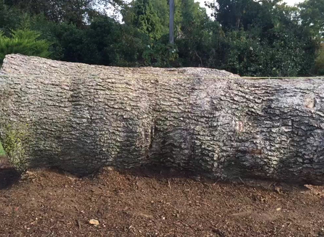 Watch Time-Lapse Video of Beautiful Bench Carved out of the Fallen Tree on Churt Recreation Ground