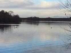Walk 3 Frensham pond