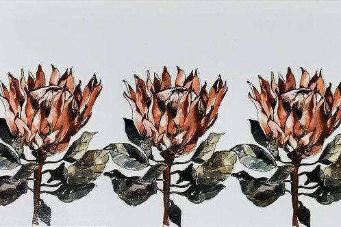 Protea 3x