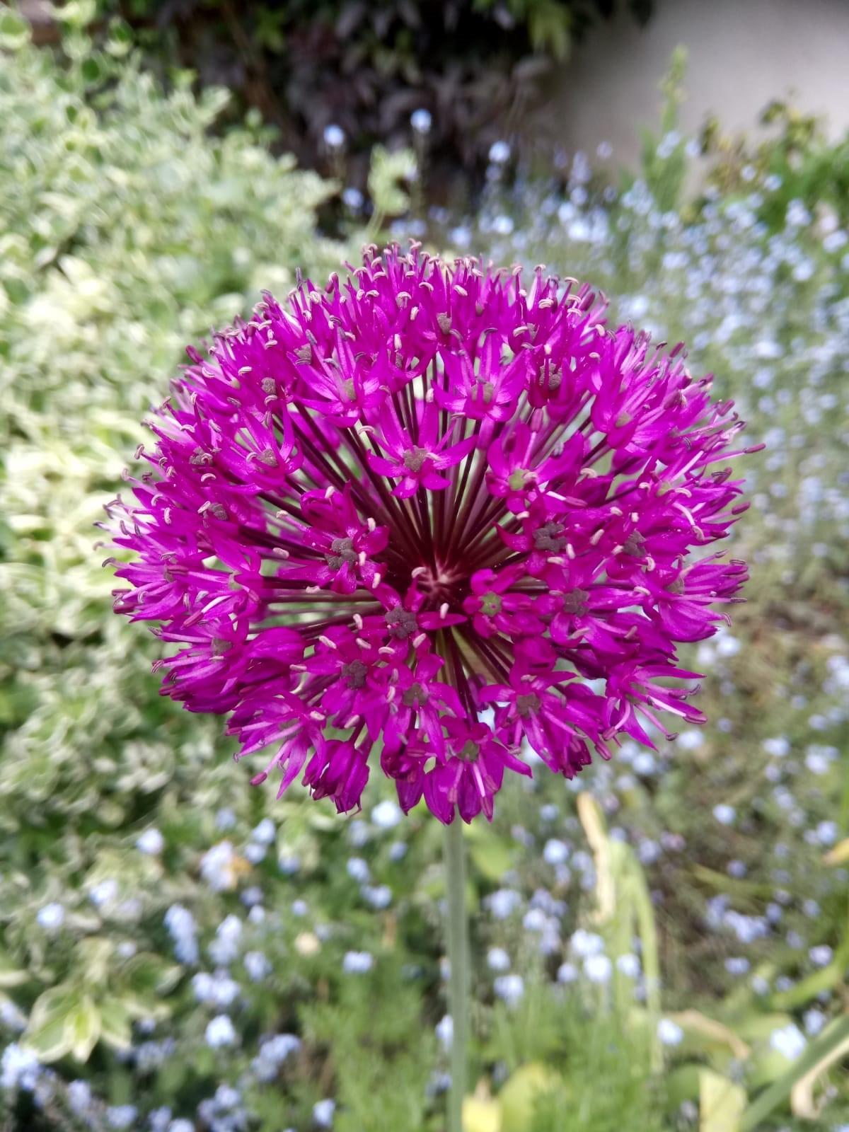 garden Flowers 4.jpg