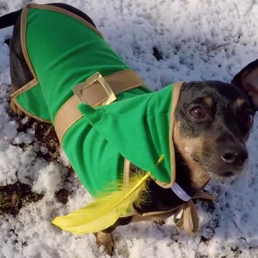 Minuet the dog in Heroes And Villains Music Video