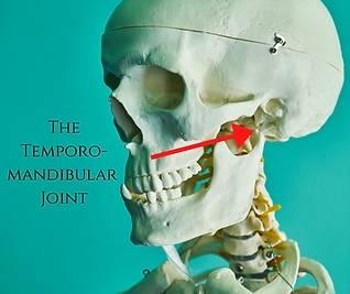 TMJ Joint.png