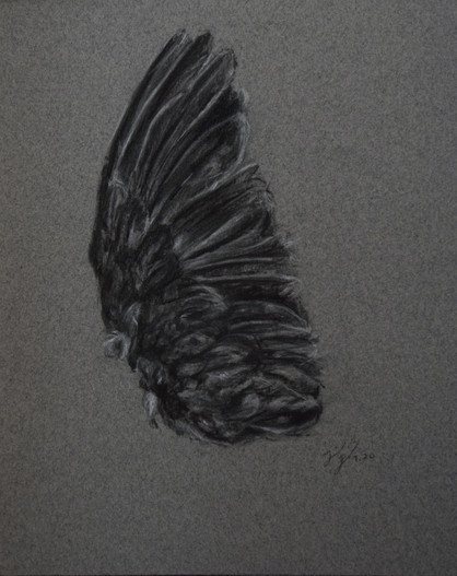 Mourning Dove II
