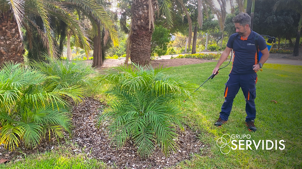 INSO | Jardinería