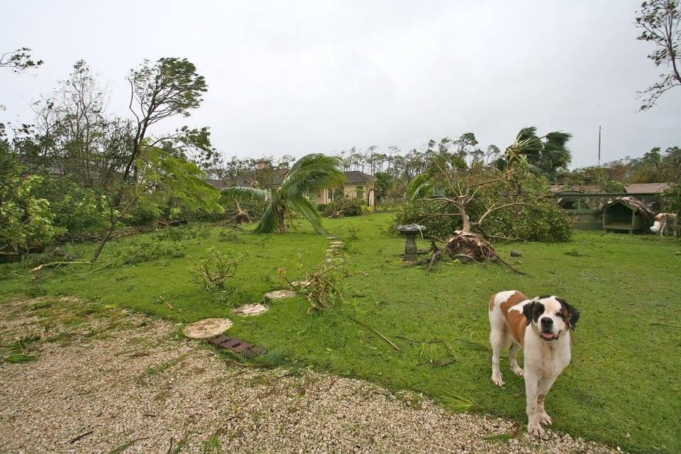 Pet named Bear onlooking after Hurricane Matthew left sanctuary in ruins.