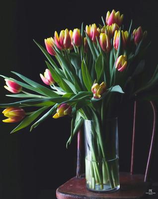 Tulips Still Life