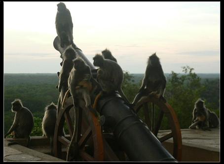 Invasion of the Monkeys!!