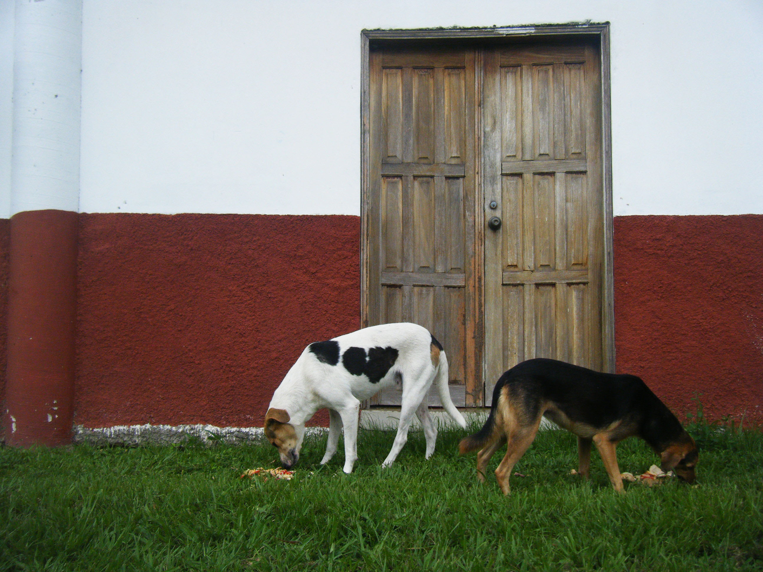 Flickr - Honduras 458