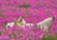 polar bear in pink flowers.jpg