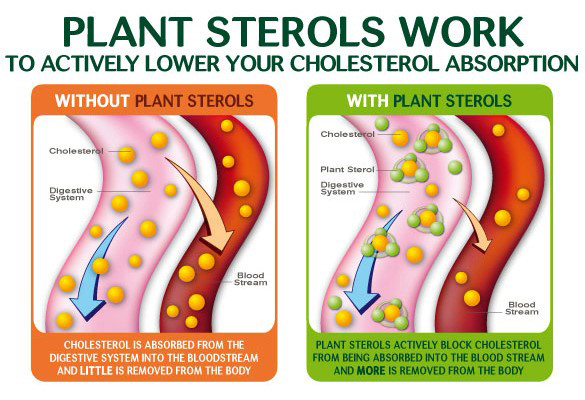 Plant Sterols working diagram, with and without plant sterols post by Kaitlin Ellis Dietitian at The Neighbourhood Clinic