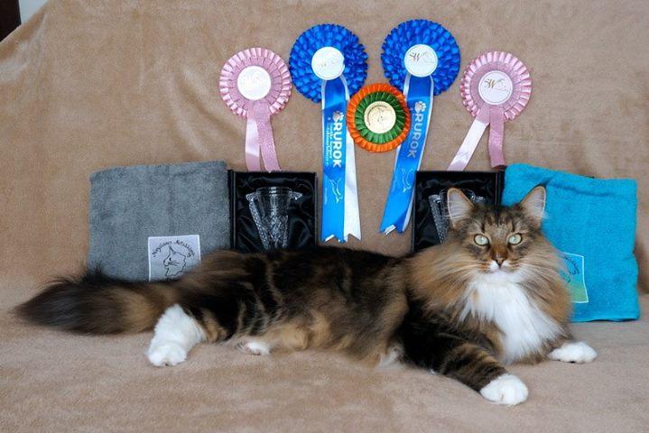 Mingis e seu prêmios no SWS 2016