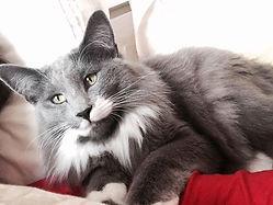 Fotos de gatos Miadore morando com seus proprietários