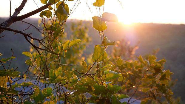 Sunrise Website Pic.jpg