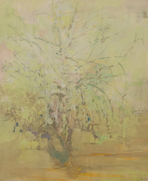 Acacia tree, Kruger