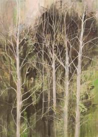 Birch trees in garden, Hout Bay