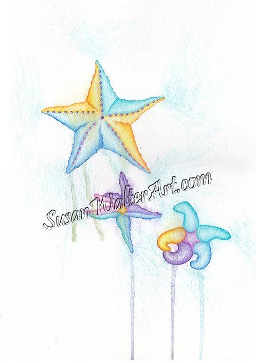 Ocean Guardian, Starfish